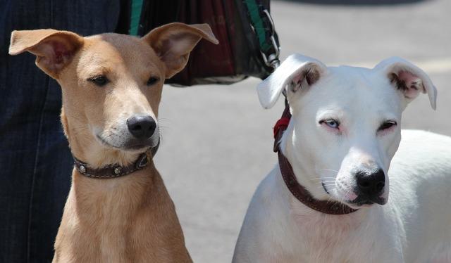Dogs hundeportrait on leash, animals.