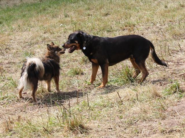 Dogs pet taster, animals.