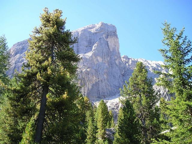 Dolomites mount kofel trees.