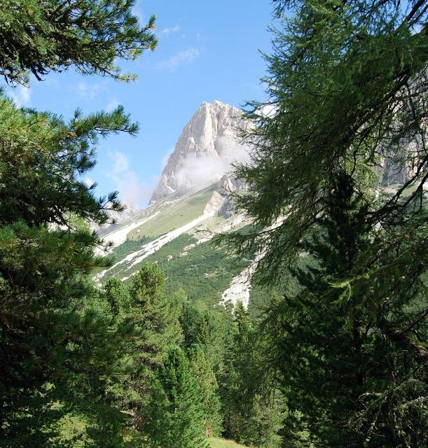 Dolomites trees mountains.