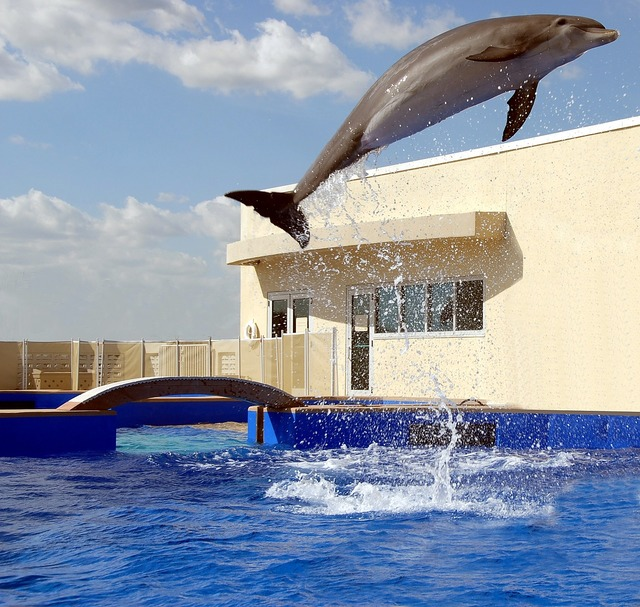 Dolphin jumping playing, travel vacation.