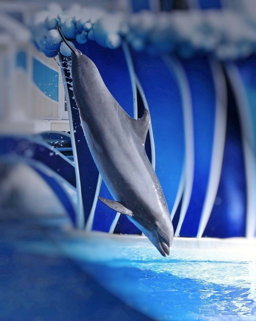 Dolphin show perform, animals.