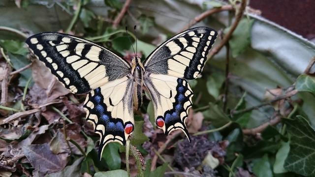 Dovetail butterfly garden.