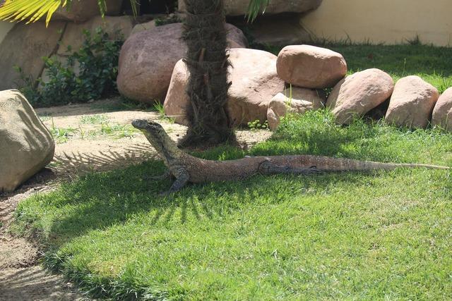Dragon comfortable zoo.