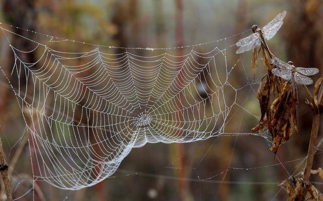 Dragonfly dew spider web, nature landscapes.