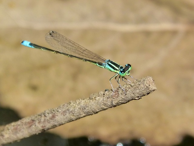 Dragonfly green and blue river.