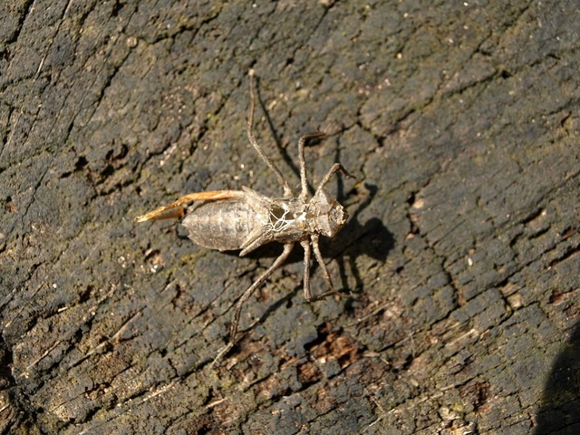 Dragonfly larva larva hatched, animals.