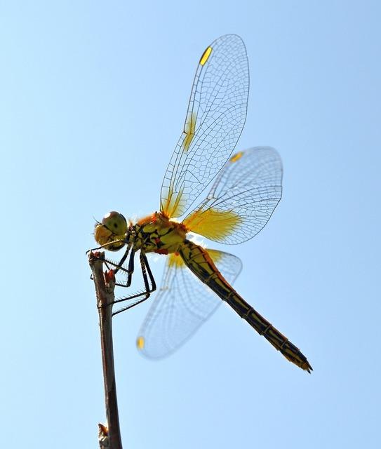 Dragonfly wings hymenoptera, animals.