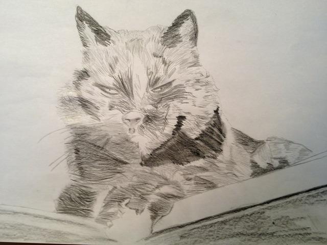 Drawing pencil cat, animals.