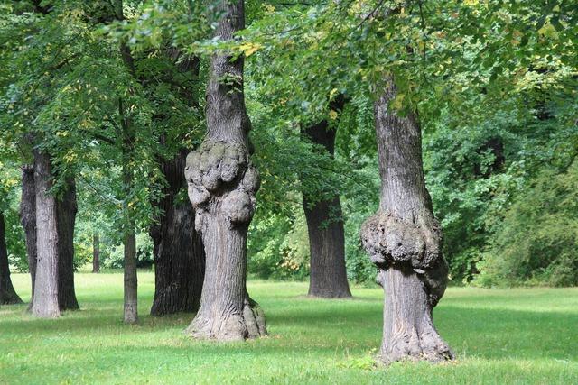 Dresden park trees.