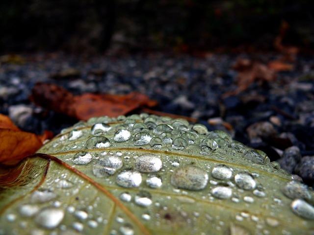Drop rain leaf, nature landscapes.