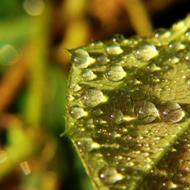 Drops water drops leaf, nature landscapes.