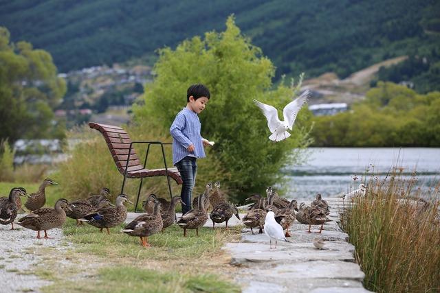 Duck birds feed, people.