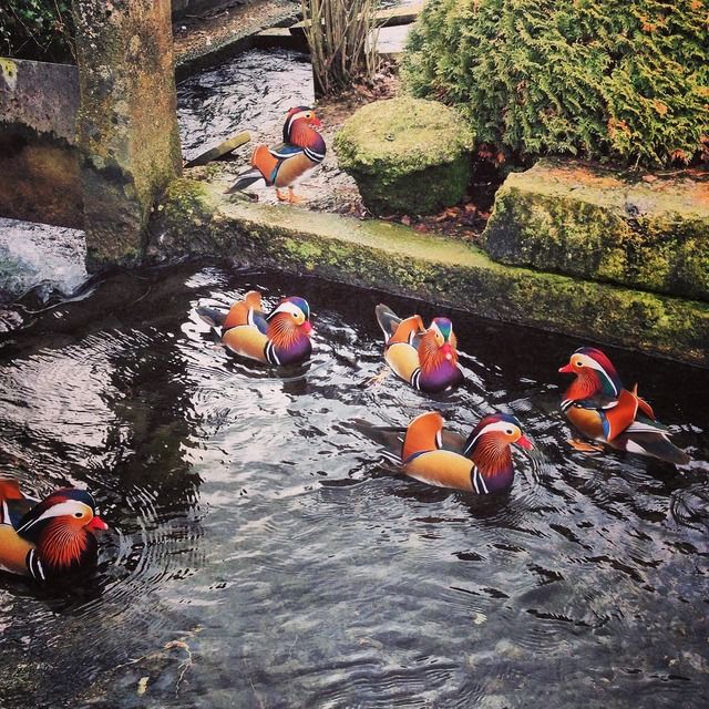 Duck france ducks.