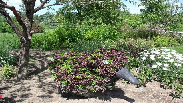 Duck garden plant, nature landscapes.