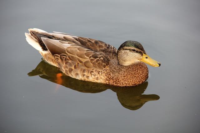 Duck pond park.