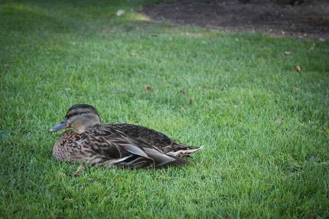 Duck surrey cute.