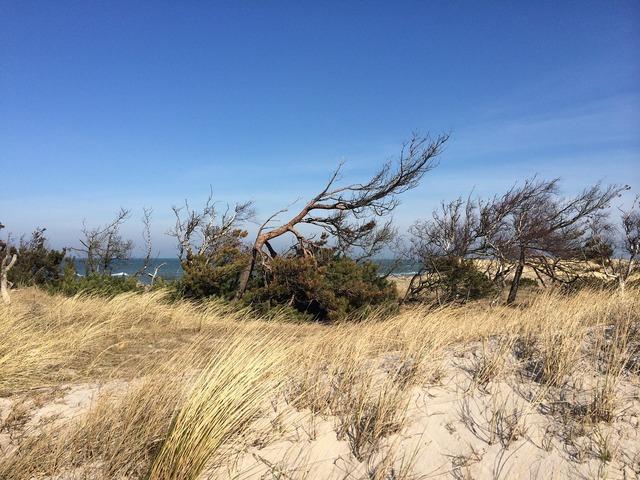 Dune beach baltic sea, travel vacation.