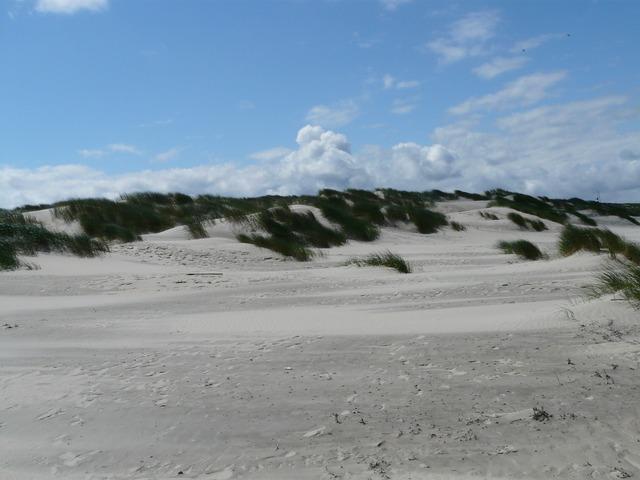 Dunes north sea sea, travel vacation.