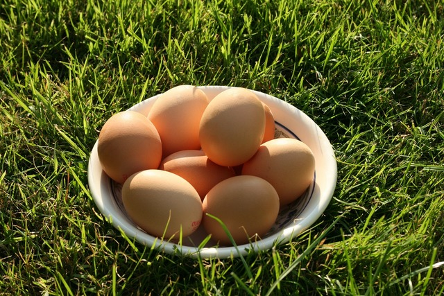 Eggs food poultry, food drink.