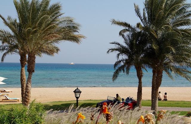 Egypt beach trees, travel vacation.