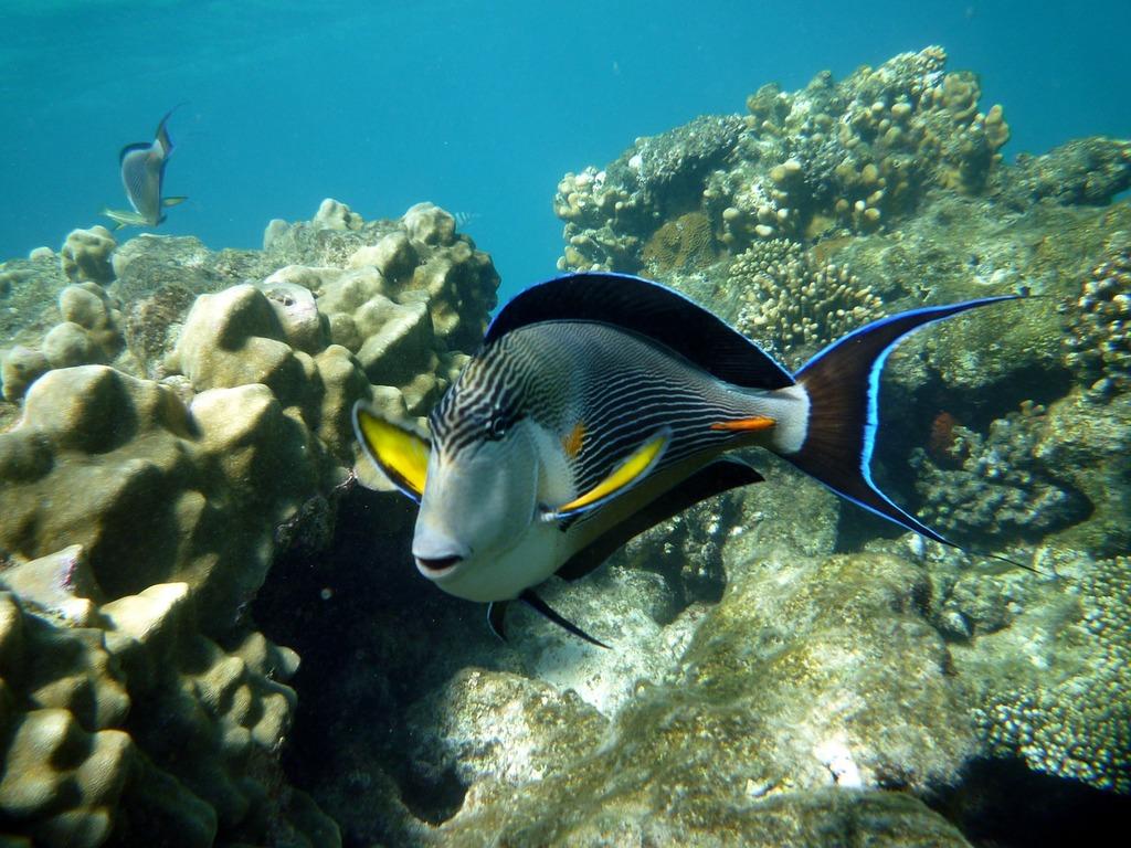 Egypt diving marsa alam.