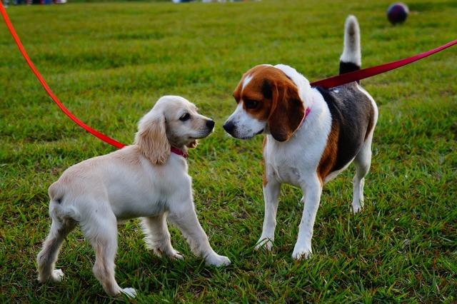 El salvador park puppies.