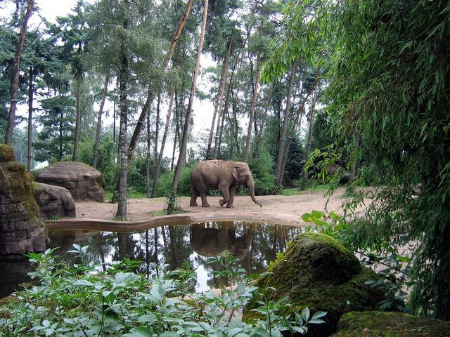 Elephant african elephant african bush elephant, animals.