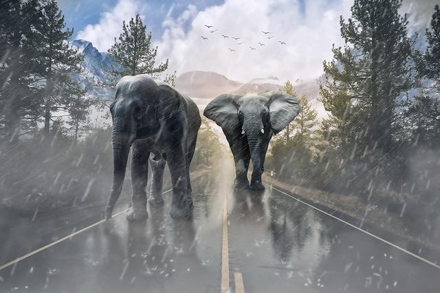 Elephant animal elephant savanna, animals.