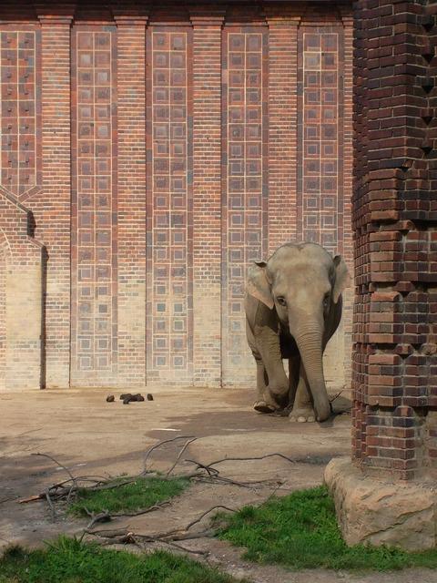 Elephant animal peanut, animals.
