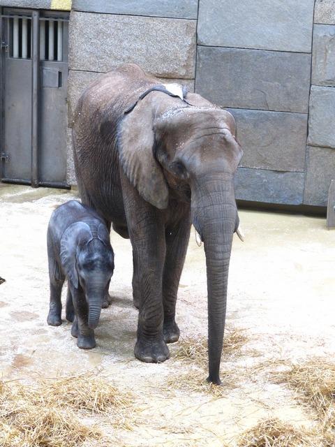 Elephant animals african bush elephant.