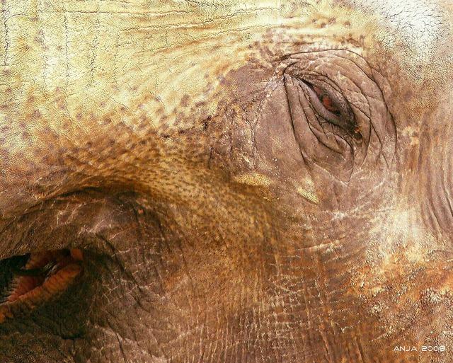 Elephant elephant skin animal, animals.