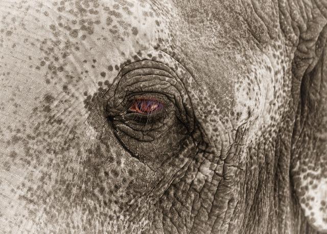 Elephant eye sad, emotions.