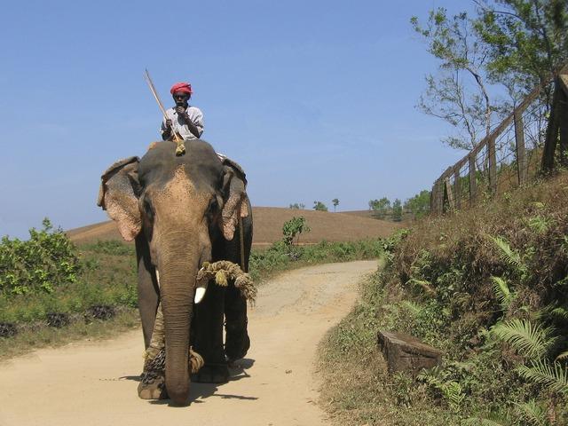 Elephant india aanayum paappanum, animals.