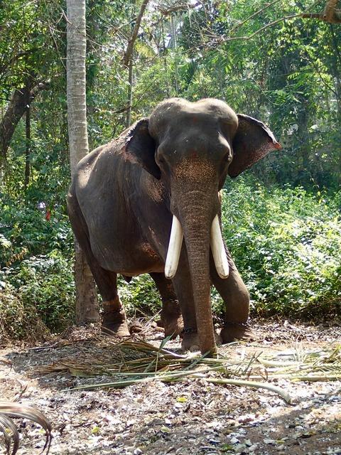 Elephant india jungle.