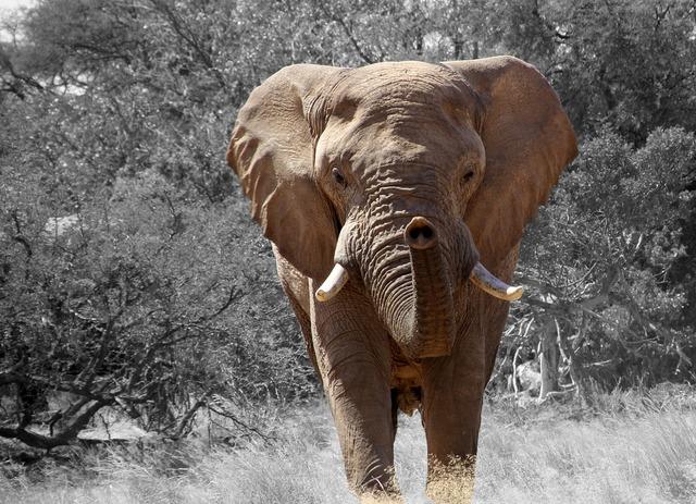 Elephant namibia africa, animals.