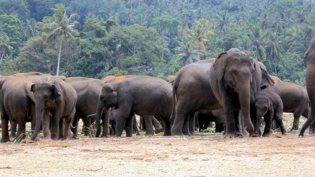 Elephant orphanage elephants elephant herd, animals.