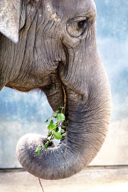 Elephant pachyderm old.