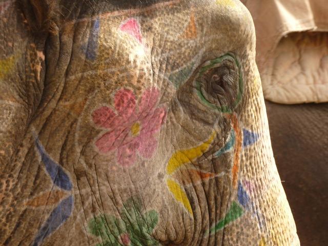 Elephant painted head.