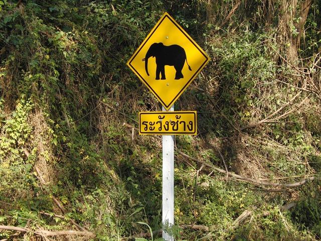 Elephant traffic sign warnschild, transportation traffic.