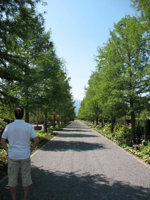 Enea garden tree lined avenue plant, nature landscapes.