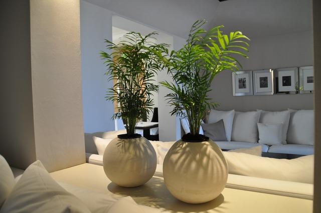 Environment living room room.