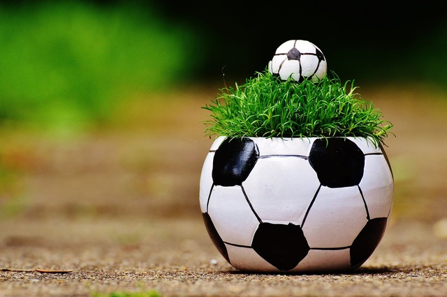 European championship football 2016, sports.