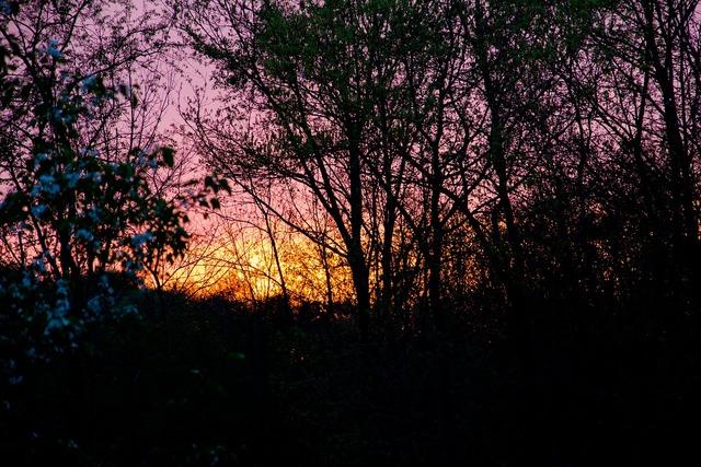 Evening forest dusk, nature landscapes.