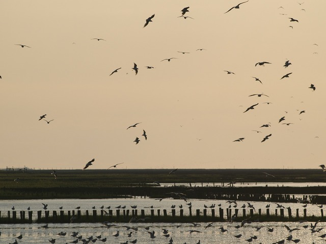 Evening sky wadden sea birds, travel vacation.