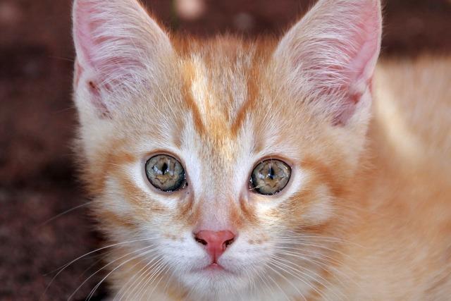 Eyes cat's eyes cat, animals.