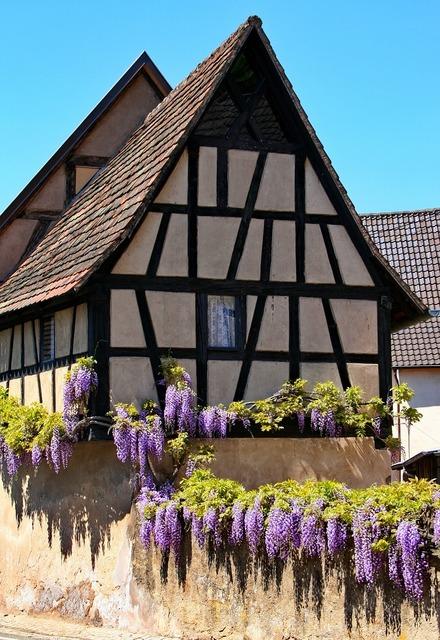 Fachwerkhaus wisteria truss, architecture buildings.