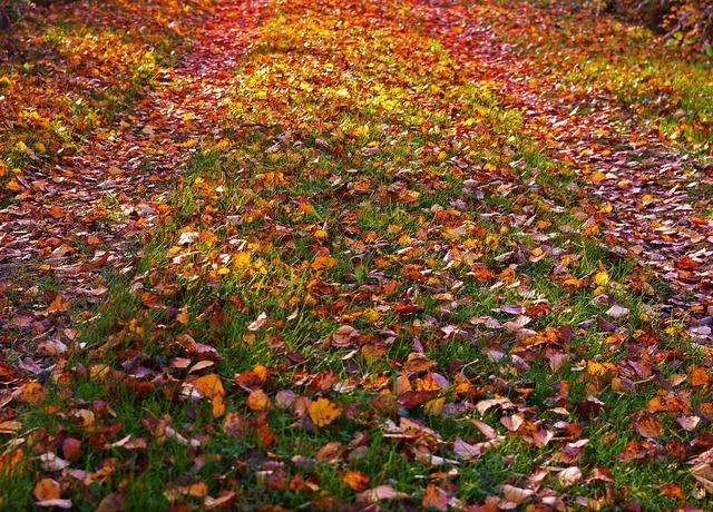 Fall foliage golden autumn autumn, nature landscapes.