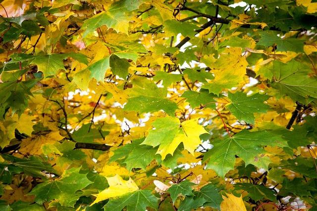 Fall leaves green, food drink.