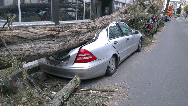 Fallen tree auto forward, transportation traffic.